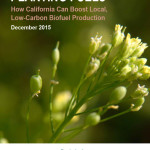 Planting Fuels: How California Can Boost Local, Low-Carbon Biofuel Production
